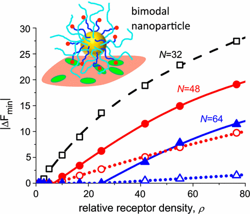 Selectivity of Ligand-Receptor Interactions between Nanoparticle and Cell Surfaces